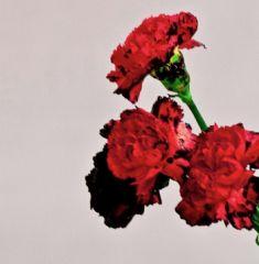 Love In The Future - CD / John Legend / 2013