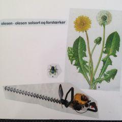 Solsort og Forstærker - LP / Olesen-Olesen / 2005 / 2017
